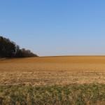 unbebautes Grundstück